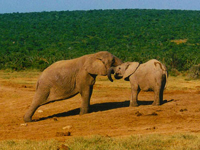 Addo Elephant Park - Study Abroad Journal