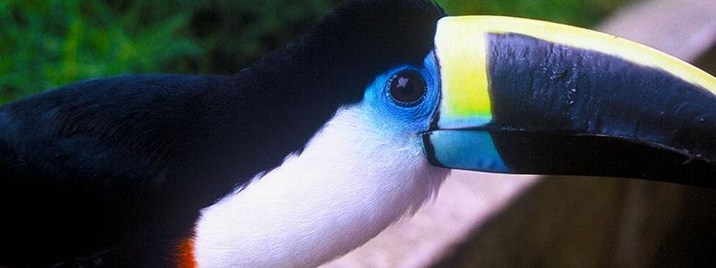 Tiputini – Treasure of the Amazon